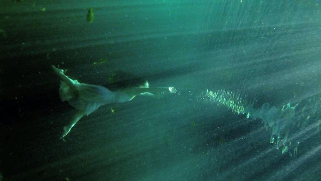 a woman swims underwater toward surface light, oriented sideways